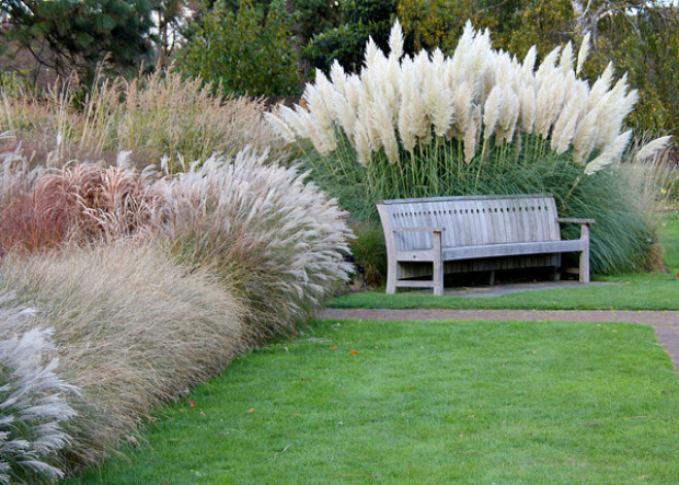 Ornamental Grasses as Accent and Border Plants