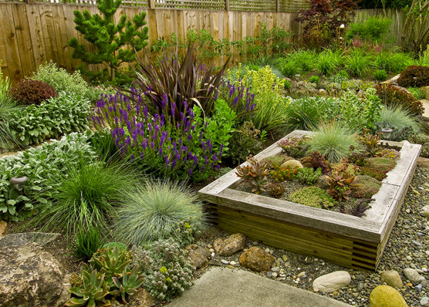 Try these drought tolerant plants as lawn replacements.