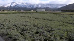 TY-Yard-4-February-28-2012