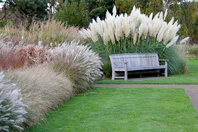 Ornamental grasses as accent and border plants t y nursery for Ornamental grass border design